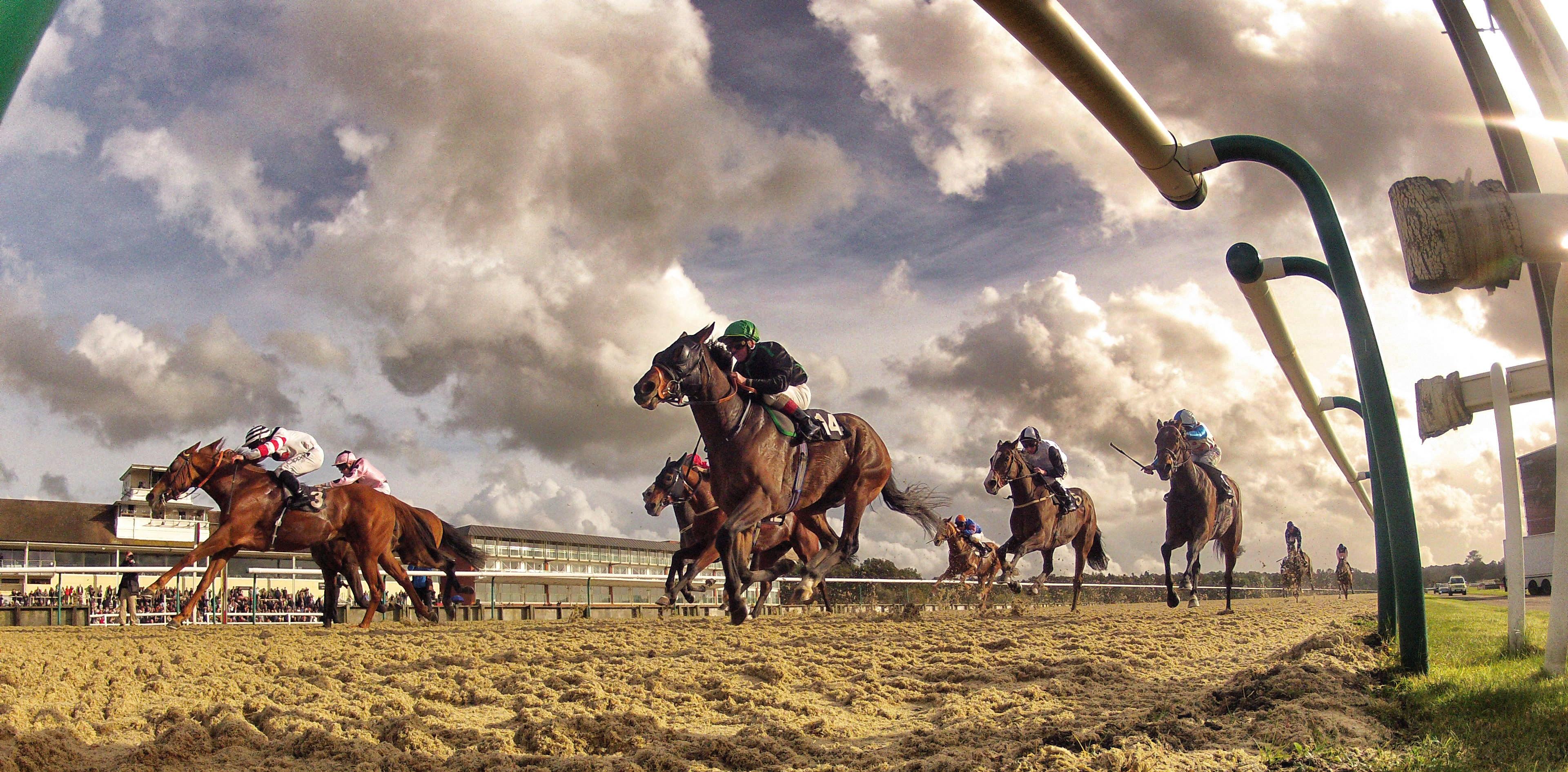 horse racing racecards
