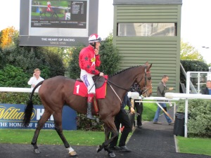 Trainer Nigel Twiston-Davies has high hopes for The New One this season.