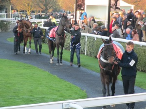 Horses parade at Kempton Park.