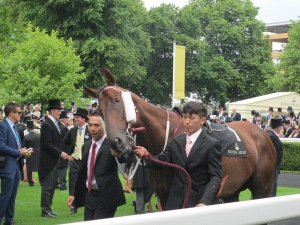 Able Friend parades ahead of the opening race at Royal Ascot.