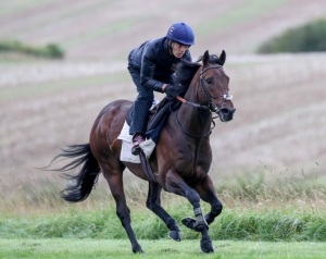 HARRY ANGEL on the Gallops Clive Cox 1 Updated